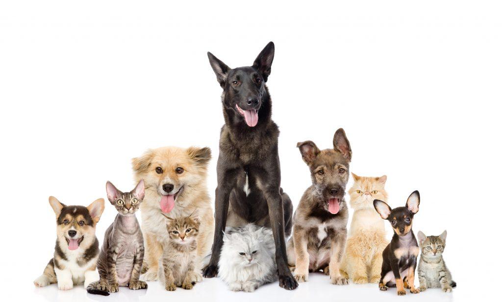 Hundar och katter - välkommen till oss på C&C Djurcenter!